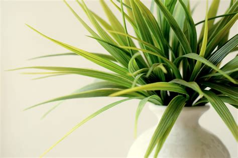 plants that don t need light 5 office plants that don t need sunlight plants for