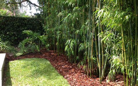 bamboo garden design ideas 10 bamboo landscaping ideas garden club