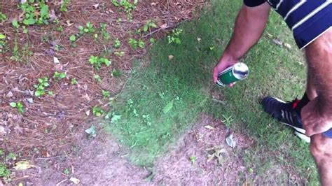 spray painting your lawn green lawn paint for touch up of brown dead dormant