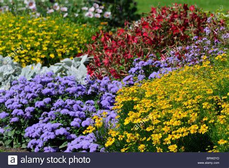 garden border plants flowers herbaceous perennial garden border mixed plants flowers