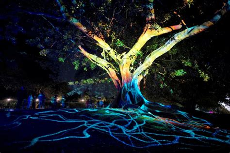sydney tree lighting sydney lights up with show but traffic slows