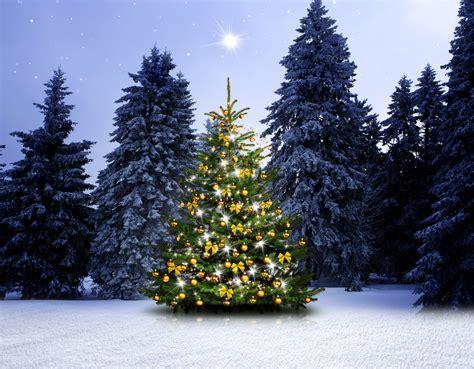 Der Besondere Garten Gutschein by Der Besondere Weihnachtsgru 223 Garten