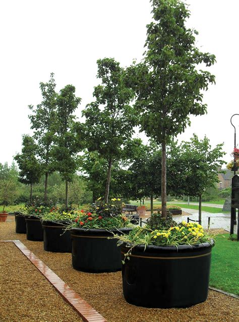large planters for trees tips of selecting tree planter box homesfeed