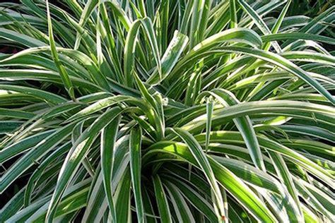 les meilleures plantes d int 233 rieur pour votre sant 233 frenchimmo