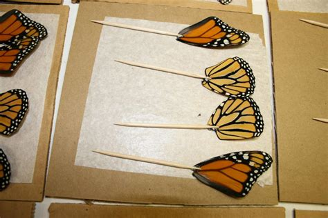 how to make butterfly wing jewelry the of jewelry made of real butterfly wings