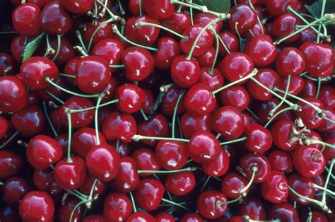 cherry tree no fruit simply spellbinding facts about cherries