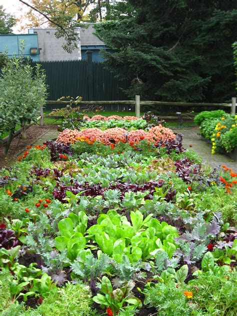 vegetable gardens vegetable garden plans nz pdf