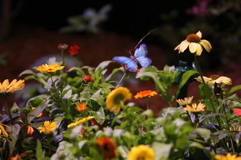flower and garden show pictures flower and garden show hartford courant