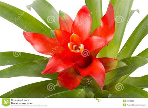 fleur de plante d int 233 rieur sur un fond blanc image libre de droits image 38205236