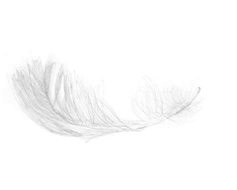 white feather lights the feather inclusion guide when to avoid feathers