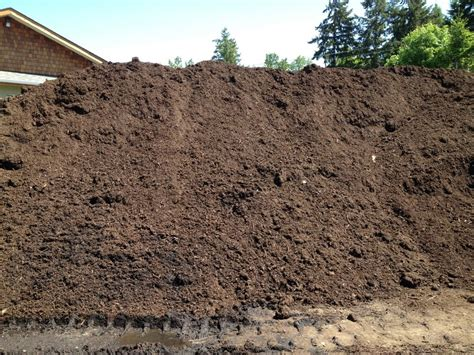 steer manure in vegetable garden steer compost