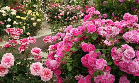 most beautiful flower garden 4k most beautiful flowers flower shrubs and colorful