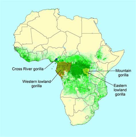 Western Lowland Gorilla Map - Share Online