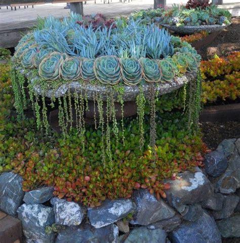 planters for succulents succulent planter succulents