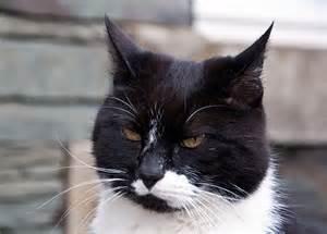 black and white cat tt22e photographs
