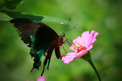 kupu kupu dunia kupu kupu 1 by arielitem on deviantart