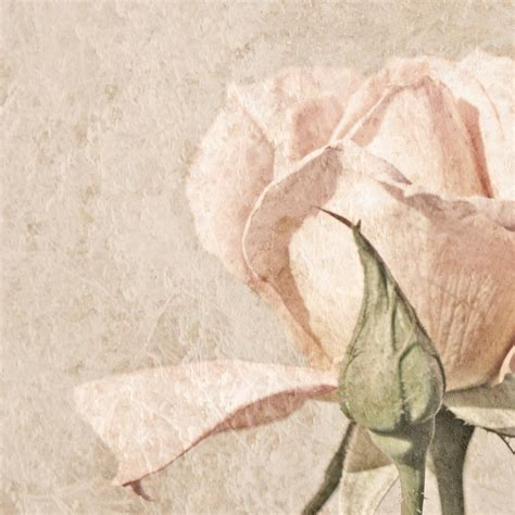 Cover Letter vintage rose painting by brooke t ryan