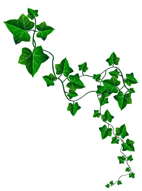 vine ivy decoration png clipart image gallery