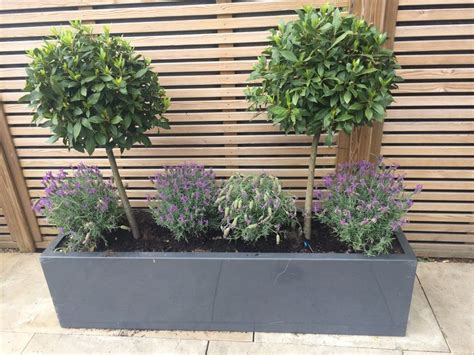 small potted trees 25 best ideas about potted trees on trees in