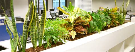 plants for the office the best office plants for happy workers the garden