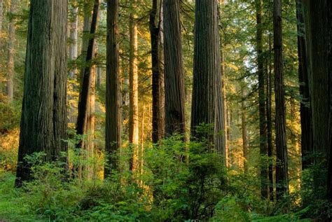 chagne trees trees deal with climate change better than expected the