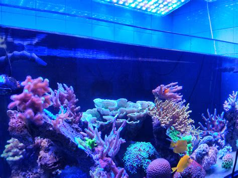 aquarium led lights par aquarium led lighting orphek aquarium led lighting