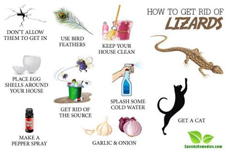 how to make a lizard out of how to get rid of lizards home remedies by speedyremedies