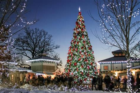 zoo festival of lights the cincinnati zoo an insider s guide