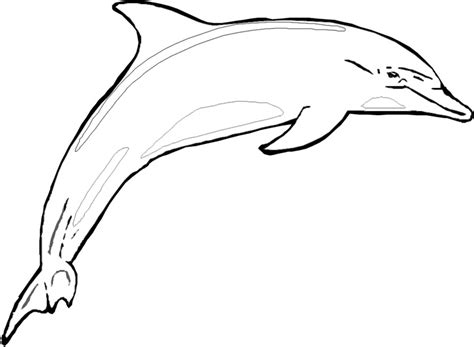 printable dolphin pictures cliparts co