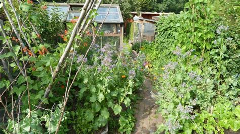 self sufficient vegetable garden kate fox sustainable self sufficiency