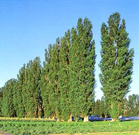 popular types of trees just a lil awards