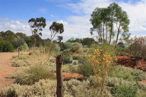australian arid lands botanic garden australian arid lands botanic garden adelaide by