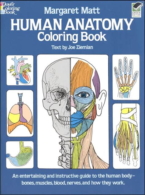 anatomy picture book human anatomy coloring book