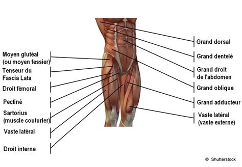 douleur des adducteurs douleur du pubis est ce une pubalgie lepape info