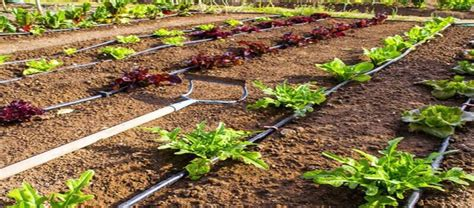 watering vegetable garden with sprinklers drip irrigation or soaker hose for vegetable garden