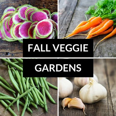 what should i plant in my vegetable garden what to plant in a fall vegetable garden