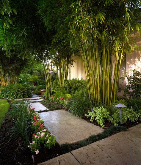 bamboo garden design ideas bamboo landscaping guide design ideas pro tips