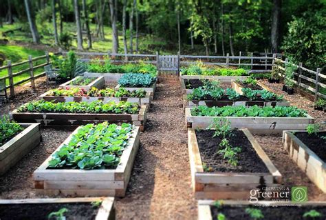 what to plant in raised vegetable garden three key benefits of gardening in raised beds growing a
