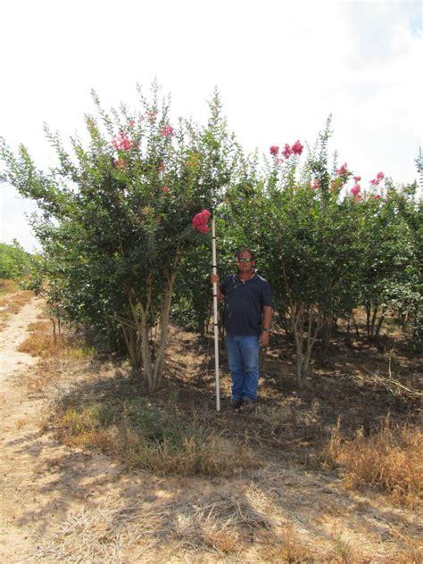 tree farm louisiana louisiana tree farm inc plantant
