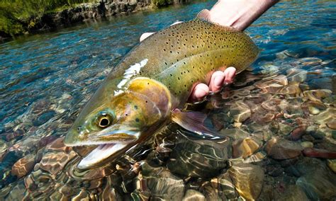 fishing trout how to fly fish sections of trout water fly