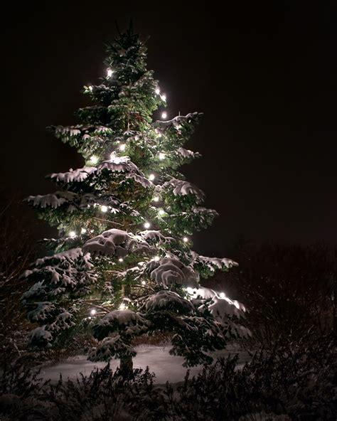der weihnachtsbaum ergebnis f 252 r ein weihnachtsbaum in berlin der