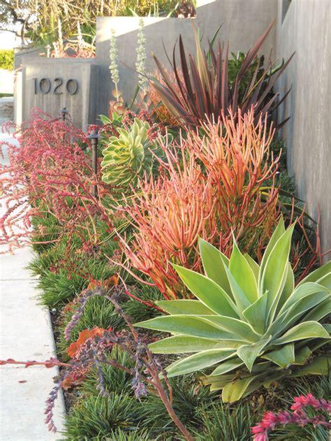 tropical front garden ideas 25 best ideas about tropical backyard on