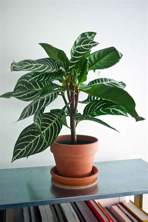 house plants that don t need sunlight