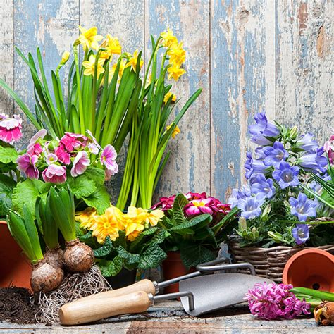 garden flower types 7 types of flowers to grow in summer garden