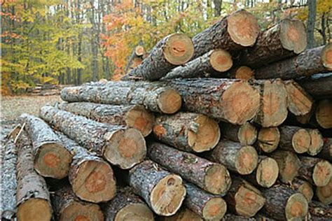 woodworking resources timber as a material of construction hubpages