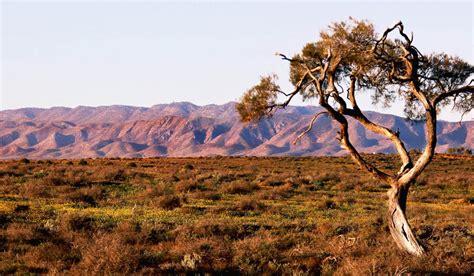 australian arid lands botanic garden 100 best views in australia 53 flinders ranges in