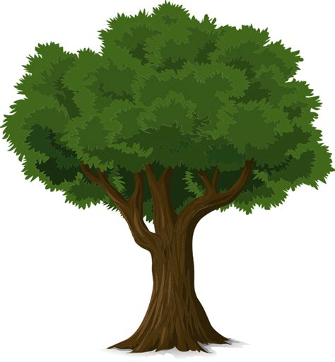 trees images free free vector graphic tree forest trunk nature leaves