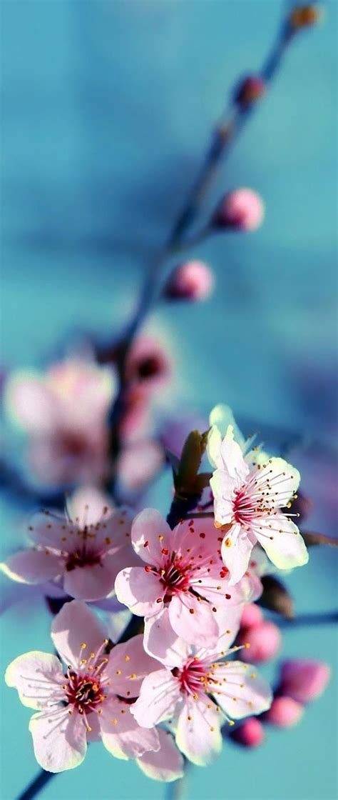 paint nite akron 25 best ideas about cherry blossom painting on
