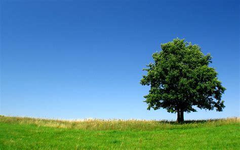 hd tree wallpaper professional tree service quot