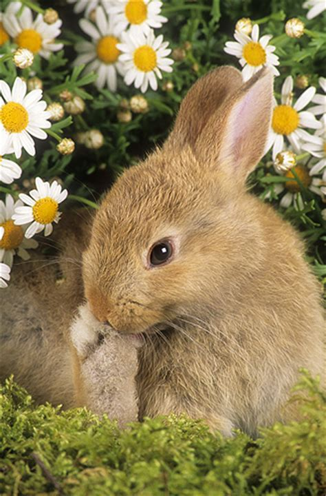 flower and bunny gail shumway photography stripey follows his